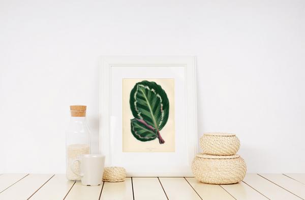 Tropical Leaves Poster Menciptakan Nuansa Segar di Dalam Rumah