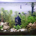 membuat aquascape anti gagal
